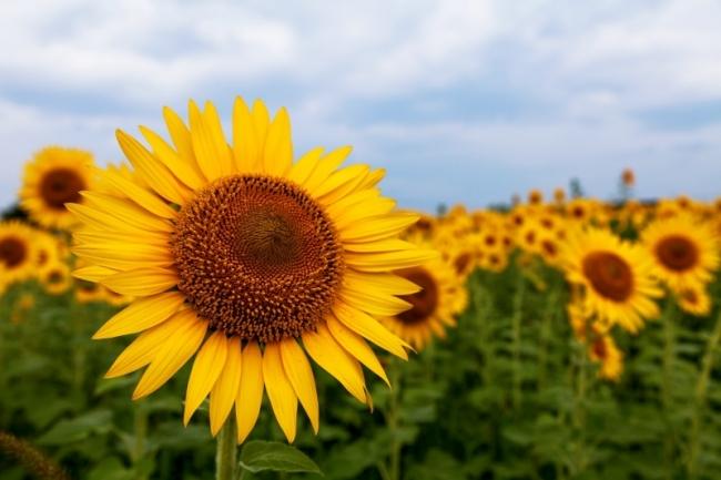 暑い日こそコルクマット!―夏にうれしいコルクマットの特徴―